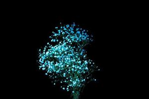 gypsophile bleu sur fond sombre photo
