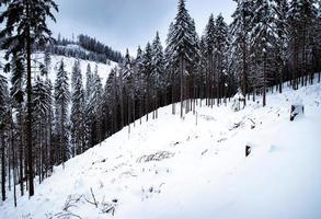 forêt d'hiver avec de la neige photo