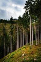 grands arbres sur une montagne photo