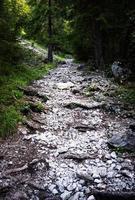 Sentier dans les bois avec des pierres blanches chemin rocheux dans une forêt photo