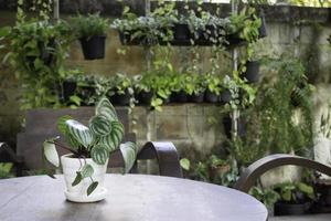 beau jardin vert d'été photo