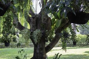 plantes suspendues à un arbre photo