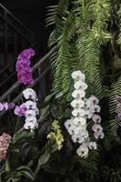 orchidées dans le jardin photo
