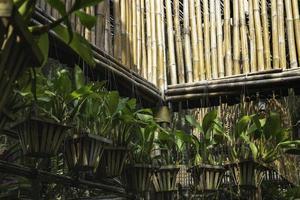 plantes suspendues dans le jardin photo