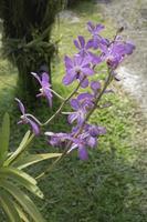 fleur violette dans le jardin photo