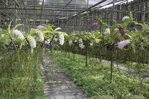 fleurs dans des paniers suspendus photo