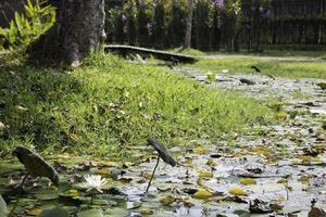 herbe verte avec un étang photo