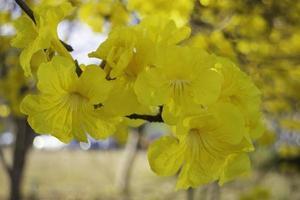 belle fleur d'été jaune photo