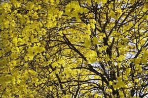 belles fleurs de fleurs d'été jaunes photo