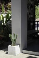 cactus dans un pot de fleurs photo