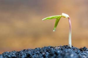 Pousse verte poussant sur un fond brun, des semis et des plantes photo