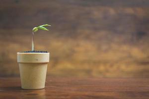 Les pousses vertes poussant dans un pot sur un fond en bois, des semis et des plantes photo