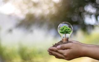 la main d'une jeune femme tenant une lampe à économie d'énergie, y compris un petit arbre photo