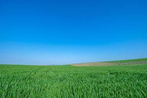 champ semé vert avec ciel bleu photo
