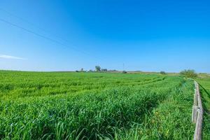 Champ semé vert rural avec ciel bleu photo