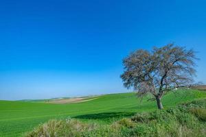 arbre dans le champ vert photo