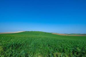 champ herbeux vert avec ciel bleu photo