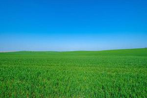 champ vert herbeux photo