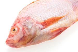 poisson frais cru photo