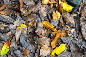 fond de feuilles dautomne dans la forêt photo