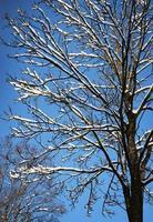 neige sur arbre photo