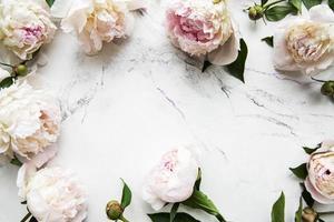 fleurs de pivoine sur fond de marbre