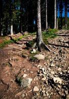 forêt avec trottoir en pierre photo