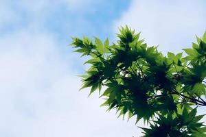 feuilles vertes des arbres au printemps photo