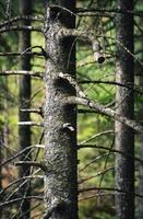 fond sombre de vieux arbres dans la forêt photo