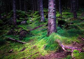 forêt sombre dense et humide photo
