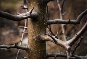 détail de branches sur un jeune arbre photo