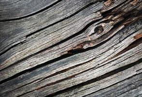 détail de vieux bois