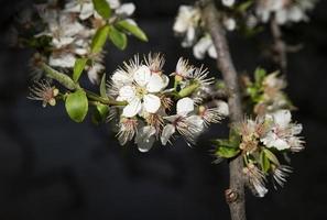 fleurs de printemps en fleurs photo