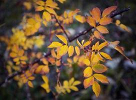 feuilles d'automne jaunes photo