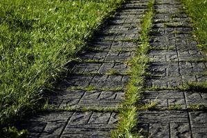 chaussée sur pelouse verte photo