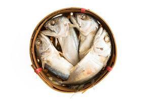 poisson maquereau isolé sur fond blanc photo