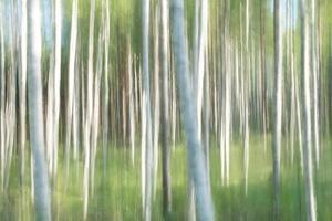 abstrait d'une forêt de bouleaux photo
