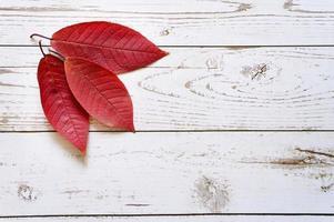 Plusieurs feuilles mortes d'automne rouge sur un fond de planche de bois clair photo