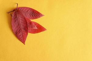 Plusieurs feuilles de cerisier d'automne tombées rouges sur un fond de papier jaune à plat photo