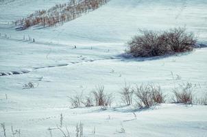 arbustes dans la neige photo