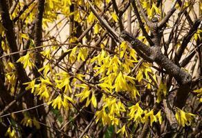 gros plan de fleurs jaunes photo