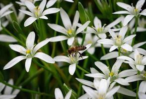 abeille sur une fleur blanche photo