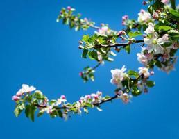 fleurs roses sur une branche