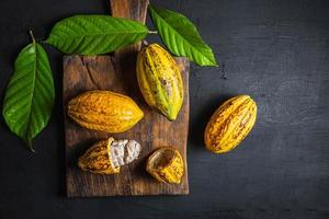 Fruits de cacao frais sur fond noir