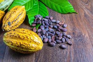 fèves de cacao fraîches photo