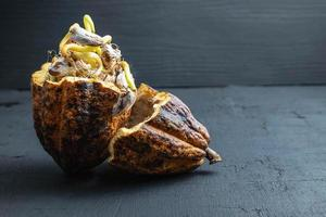 germination de graines de cacao photo