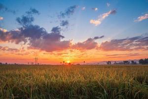 coucher de soleil coloré sur un champ