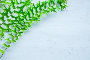 feuilles de fougère sur fond blanc photo