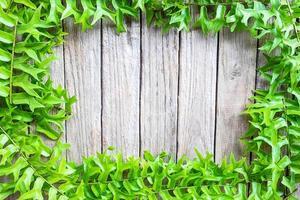 cadre de feuilles de fougère photo