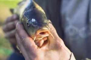 personne tenant un poisson carpe photo